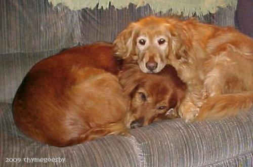 Good buddies - Jackson & Molly