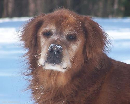 Snowy face Jackson