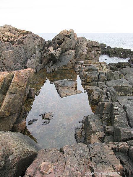 Marginal Tidal Pool