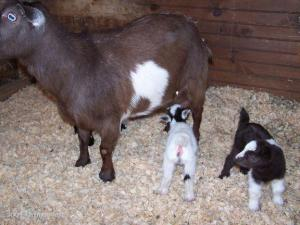 New kids.. Spring 2007