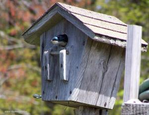 Bluebird2009thymegoesby