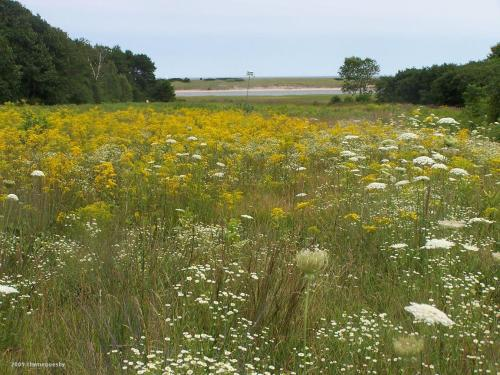 Wildflower Fields at the farm