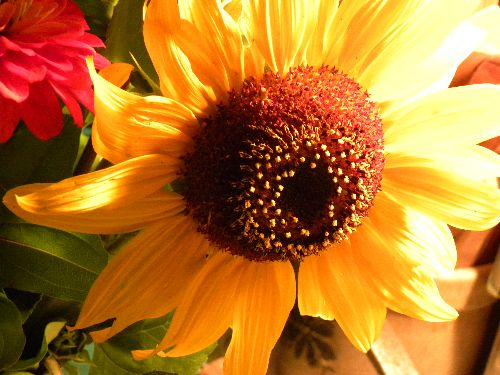 Brighten your day.. pick some sunflowers