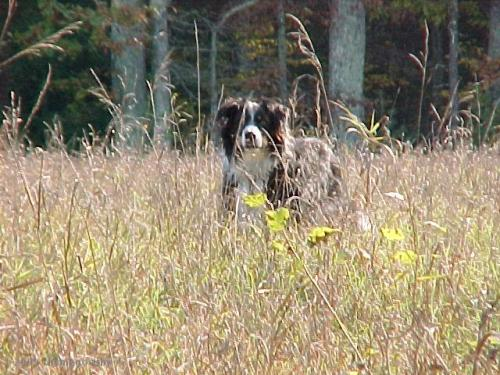 Duffy on our trails