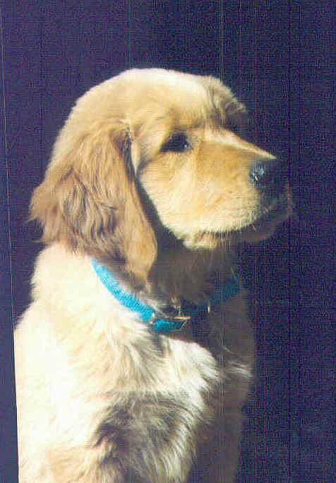 Jackson's 1st Puppy pic