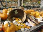 PumpkinHarvestszd2