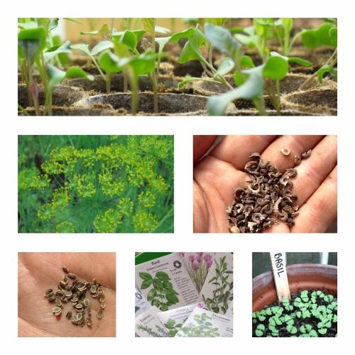 Seeding 20I9